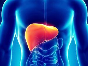 wątroba hepati