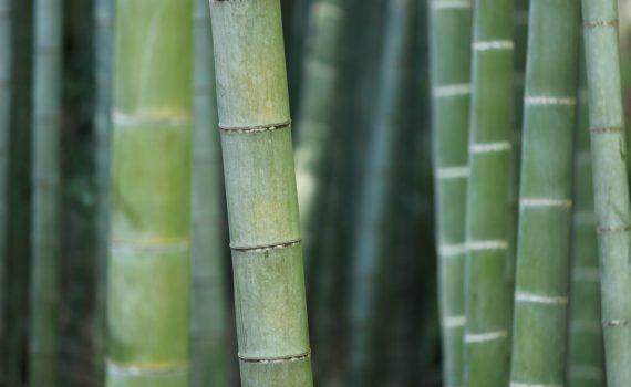 Odzież z bambusa – sprawdź czy warto