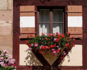 Dobroczynny wpływ kwiatów doniczkowych na nasze zdrowie i samopoczucie